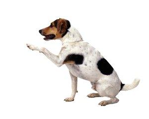 dog,dogg,doggy,world