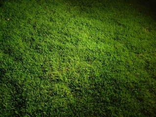 ... Grass,lawn,texture,night ...
