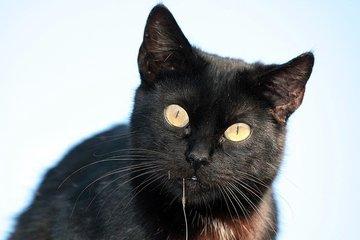 fish-hook-and-street-cat-2-1245035.jpg
