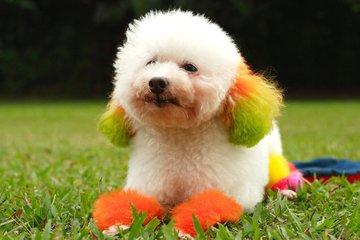 Dog,pet,campanion,cute