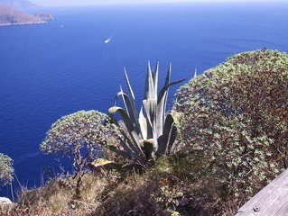 Free agave images pictures and royalty free stock photos for Agave naples