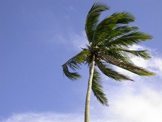 Free trees wind Images, Pictures, and Royalty-Free Stock Photos -  FreeImages.com