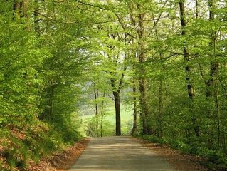 Free Forest Path Images Pictures And Royalty Free Stock Photos