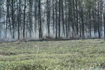 Free Forest Fire Images Pictures And Royalty Free Stock Photos