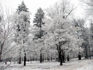 winter,snow,day,park