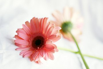 Free beautiful flower images pictures and royalty free stock flowersdaisyflowerpretty mightylinksfo