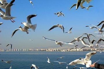 Seagulls,bird,animal,wing