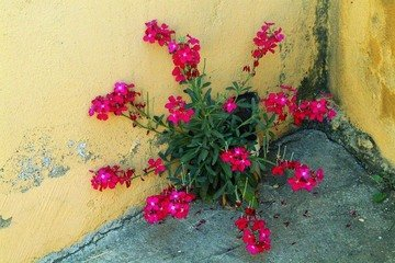 Free Flower Concrete Images Pictures And Royalty Free Stock Photos