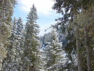 Free Forest Snow Images Pictures And Royalty Free Stock Photos