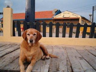 Dog,dog,beach,old