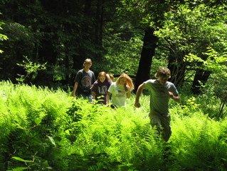 Traversant la forêt