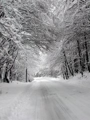 winter,snow,white,tree