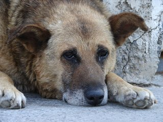 an-old-street-dog-1-1367871.jpg