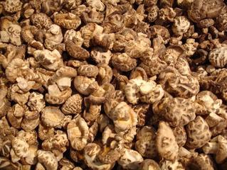 Mushrooms,mushroom,mushrooms,shitake