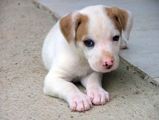 Dog,youngling,small,dog