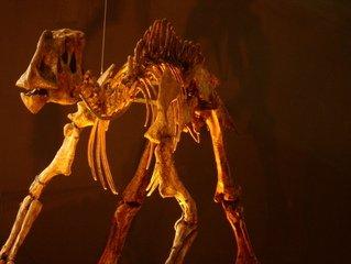 Skeleton Dinosaur 5