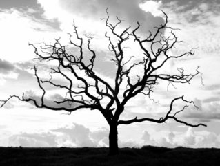Free Black And White Tree Images Pictures And Royalty Free Stock Photos Freeimages Com