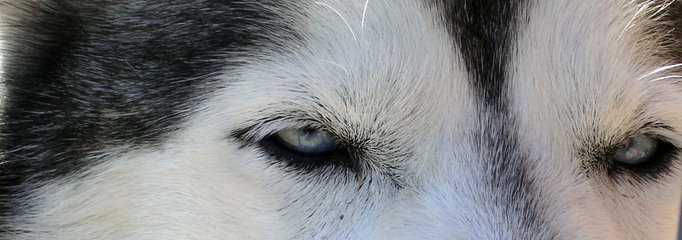 dog,look,censure,animal body part