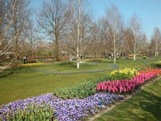 4-colours-flower-bed-1375460.jpg