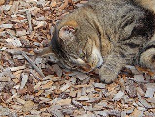 Kitten chewing litter