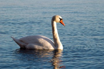 free water animal images pictures and royalty free stock photos