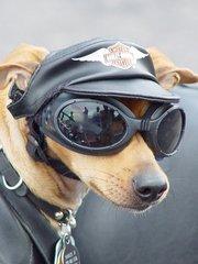 moto chien 1