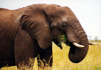 elephant,africa,kruger,national