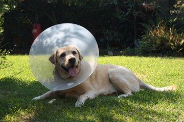 Harry,Dog,sick,cone
