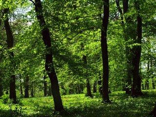 Park,park,parks,spring