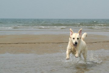 Dogs at the sea side 7