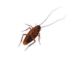 cockroach 2