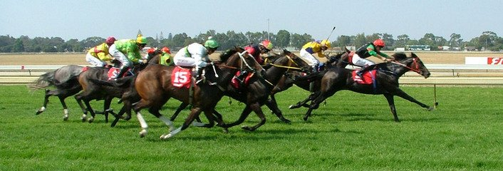 Free Thoroughbred Horse Images Pictures And Royalty Free Stock Photos Freeimages Com