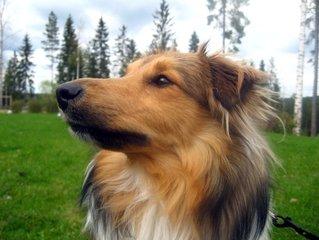 Dog's gaze