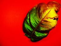 burnout leaf