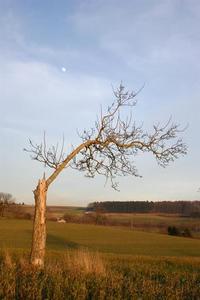 Alone tree 2