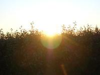 Back-light sunset