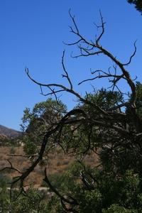 Josua tree National Park