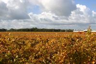 Coonawarra Autumn