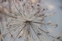 Oversized snowflake