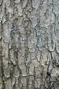 tree texture_02
