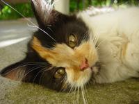 A mosaic cat