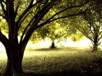 Enchanted Forest I