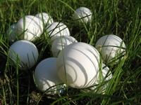 Balls in grass