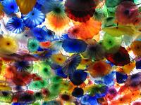 blown-glass flowers