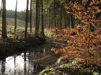 Forest in Pomerania