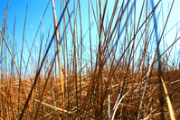 Reed 2