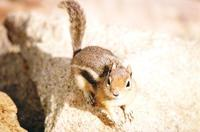 Cute Chipmunk