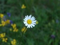 Flower_0 1
