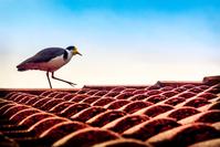 Bird on a Roof