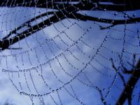 Spiderweb 2